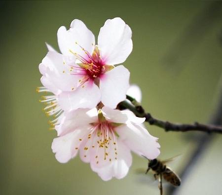 عکس پروفایل فصل بهار ، عکس گل زیبا برای پروفایل