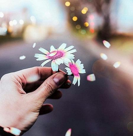 عکس پروفایل گل ، پروفایل خاص از طبیعت