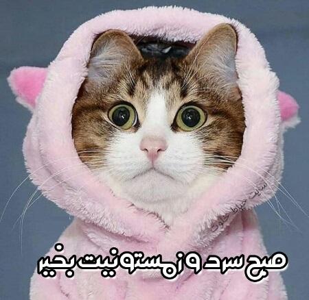 عکس سلام صبح بخیر طنز