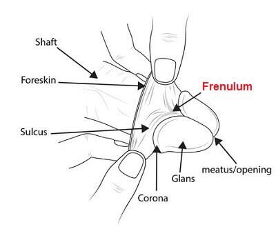 ارگاسم مردان از طریق فرنولوم آلت تناسلی